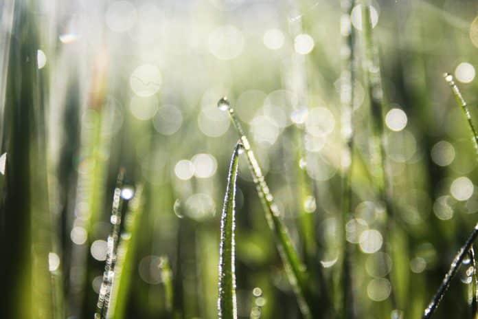 Grassprieten met dauw