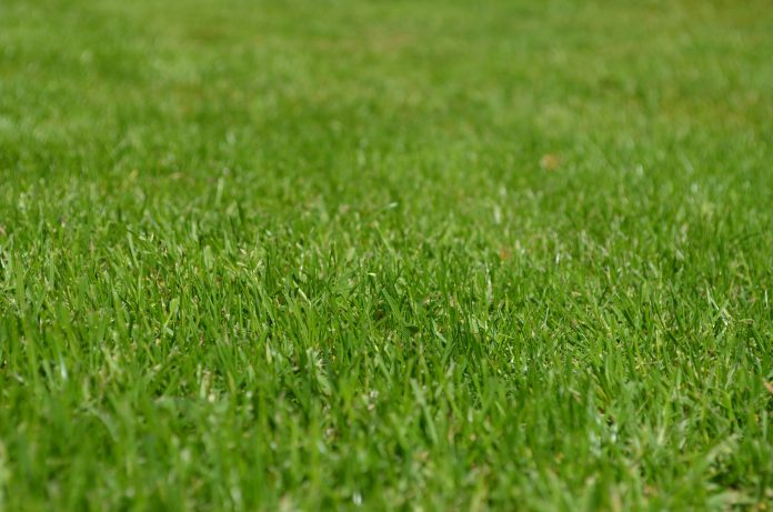 Gazon grassprieten